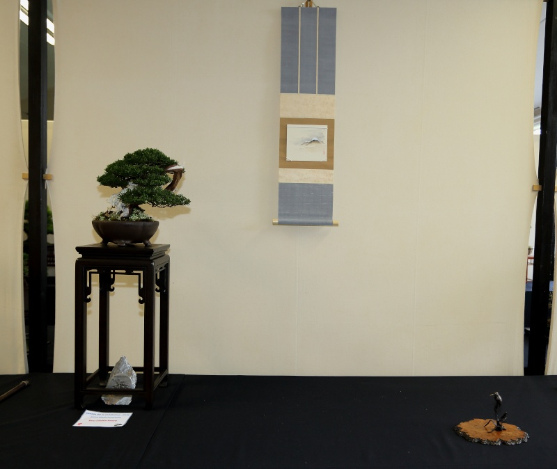Shohin UK II  exhibition - Sunday, 15 March 2015 Best_c13