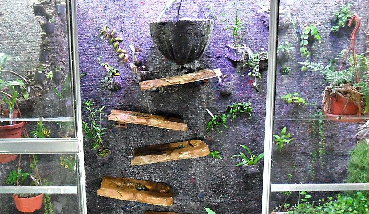 Un mur végétal dans ma serre salon 1er_ma11