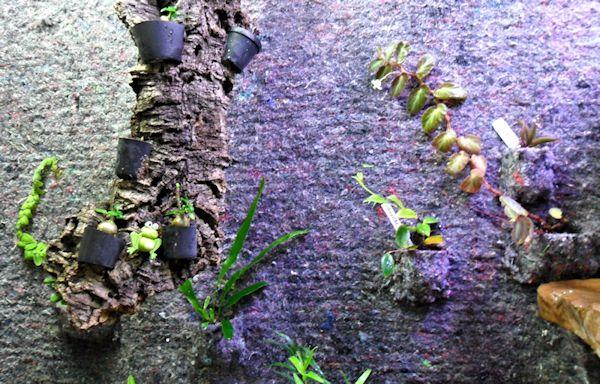 Un mur végétal dans ma serre salon 1er_ma12