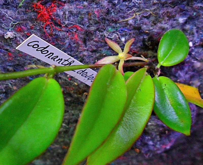 Un mur végétal dans ma serre salon - Page 2 5_codo10