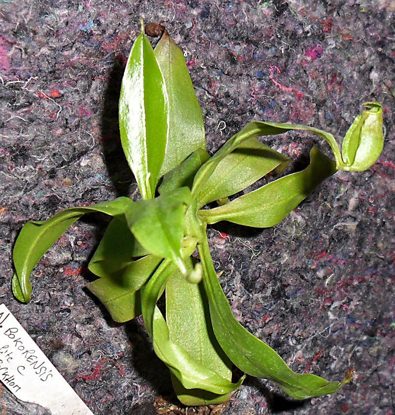Un mur végétal dans ma serre salon - Page 2 6_n_bo10