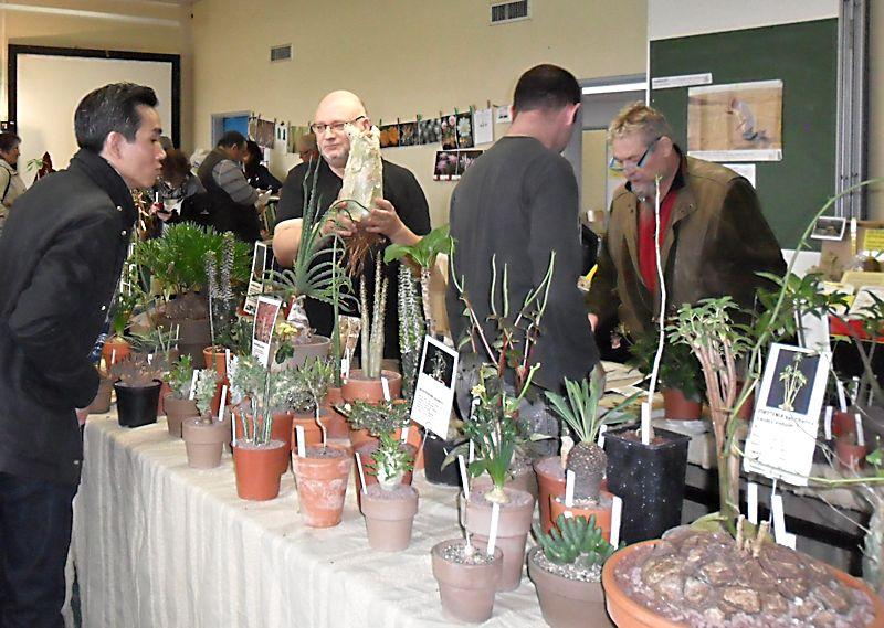Expo Vente à Edenia en région parisienne, 28 et 29 mars 2015, Cergy Pontoise 95  Plante10