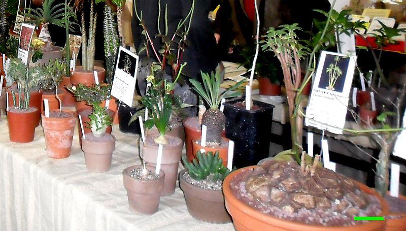 Expo Vente à Edenia en région parisienne, 28 et 29 mars 2015, Cergy Pontoise 95  Plante11