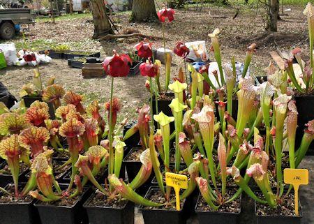 Fête des plantes en région parisienne du 10 au 12 avril 2015, St Jean de Beauregard (91) St_jea17