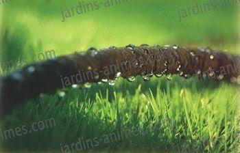 Un mur végétal dans ma serre salon - Page 2 Tuyau_10