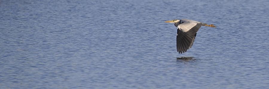 Oiseaux aux étangs de Cattenom 15042311