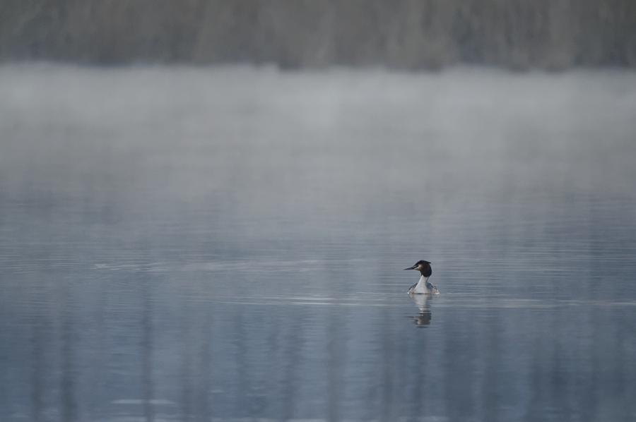 Un matin dans la brume, à Remerschen _dsc4010