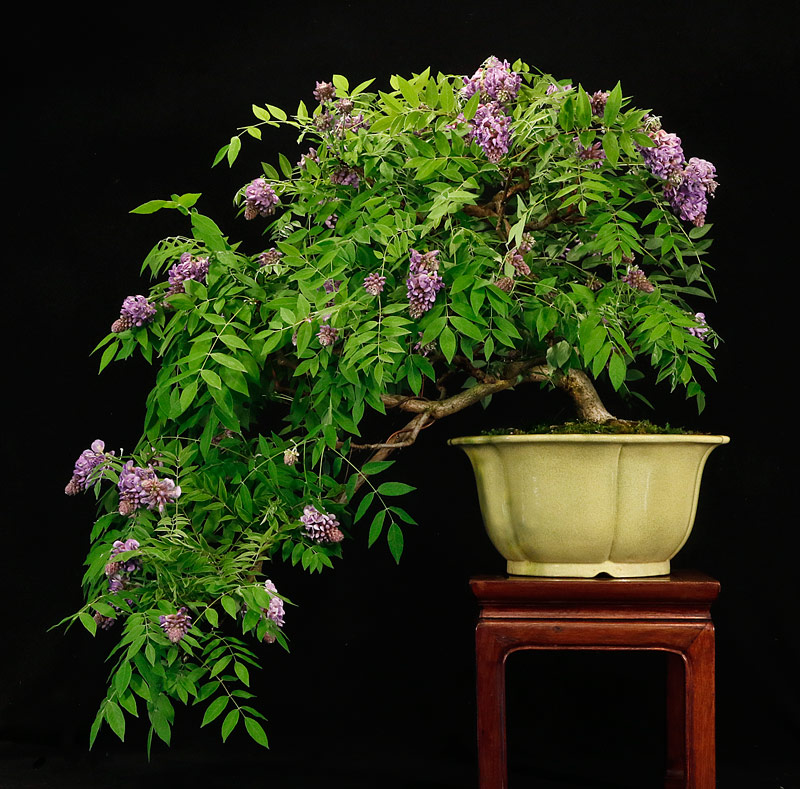 a spring display Amethy13