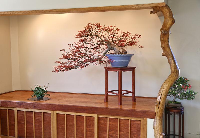 a spring display Seigen10