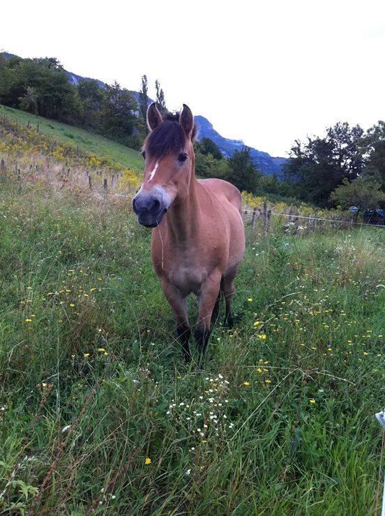 BONNIE - ONC poney née en 1989 - vendue à un marchand 11106310