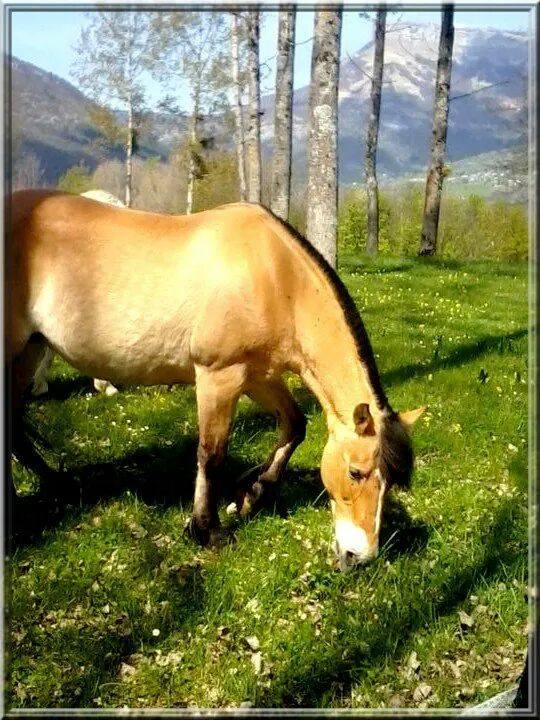 BONNIE - ONC poney née en 1989 - vendue à un marchand 11125310