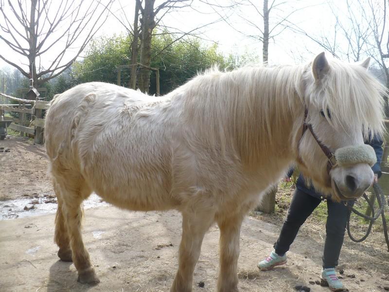 DIABOLO  - OI Poney - né en 1991 - adopté en novembre 2009 par Gaëlle Visite27