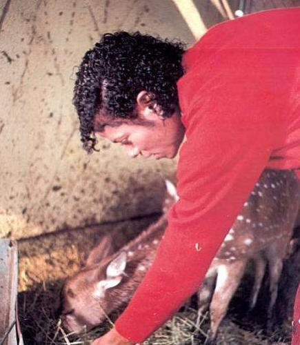 Collection MJ-Story : Michael et les animaux ^^ - Page 7 Neverl10