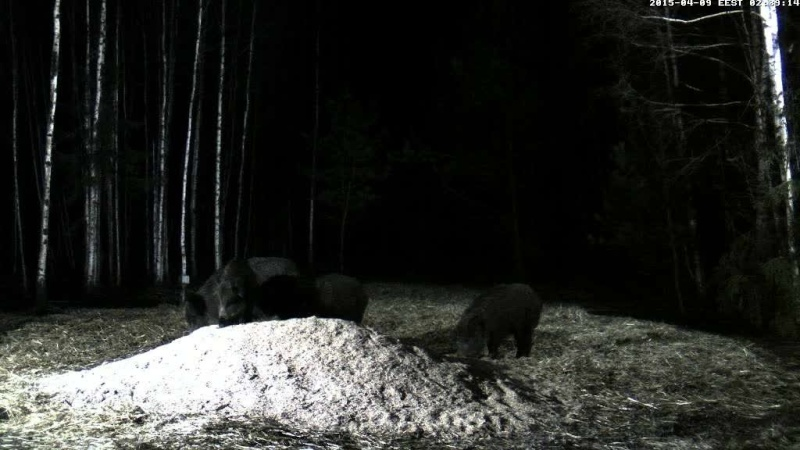 Boar cam Winter 2014-2015 - Page 11 Vlcsna63