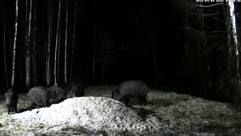 Boar cam Winter 2014-2015 - Page 11 Vlcsna64