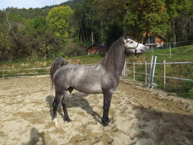 Eden - Poulain Dscf7611