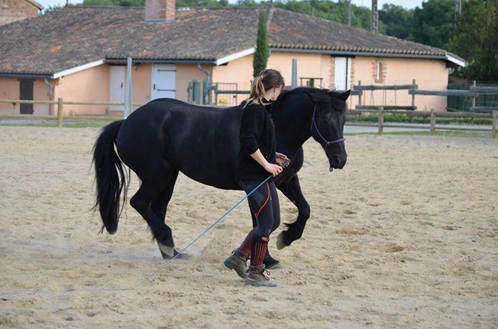 Présentation Equestre-Fête de Nivot jeudi 14 Mai 2015 Kelly10