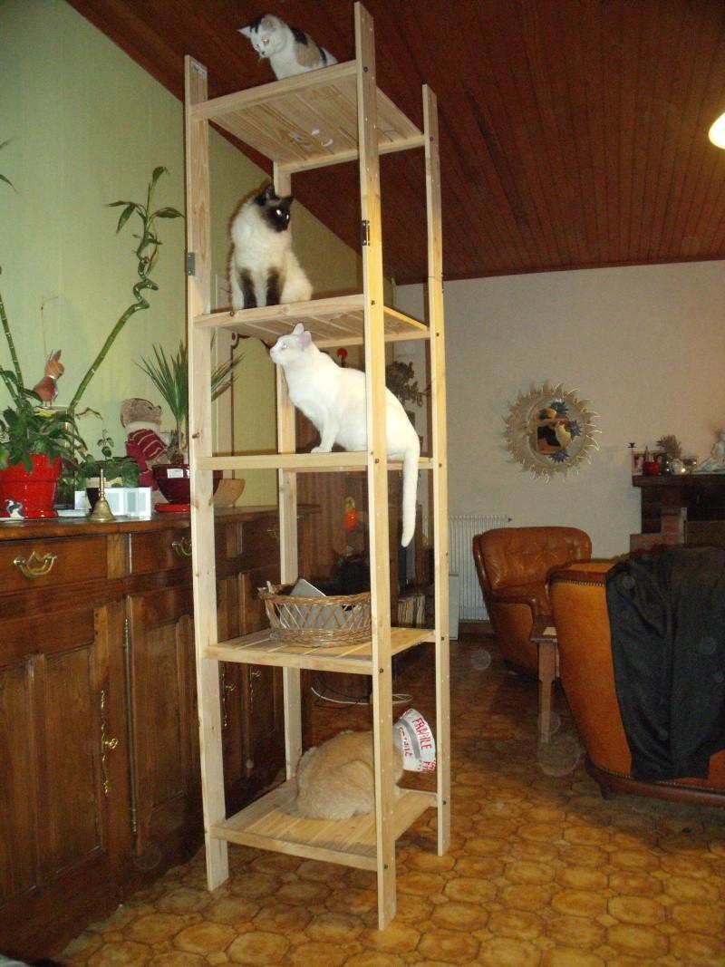 Achkatena chatte tricolore Née en Juillet 2009 (35) Chez_m10