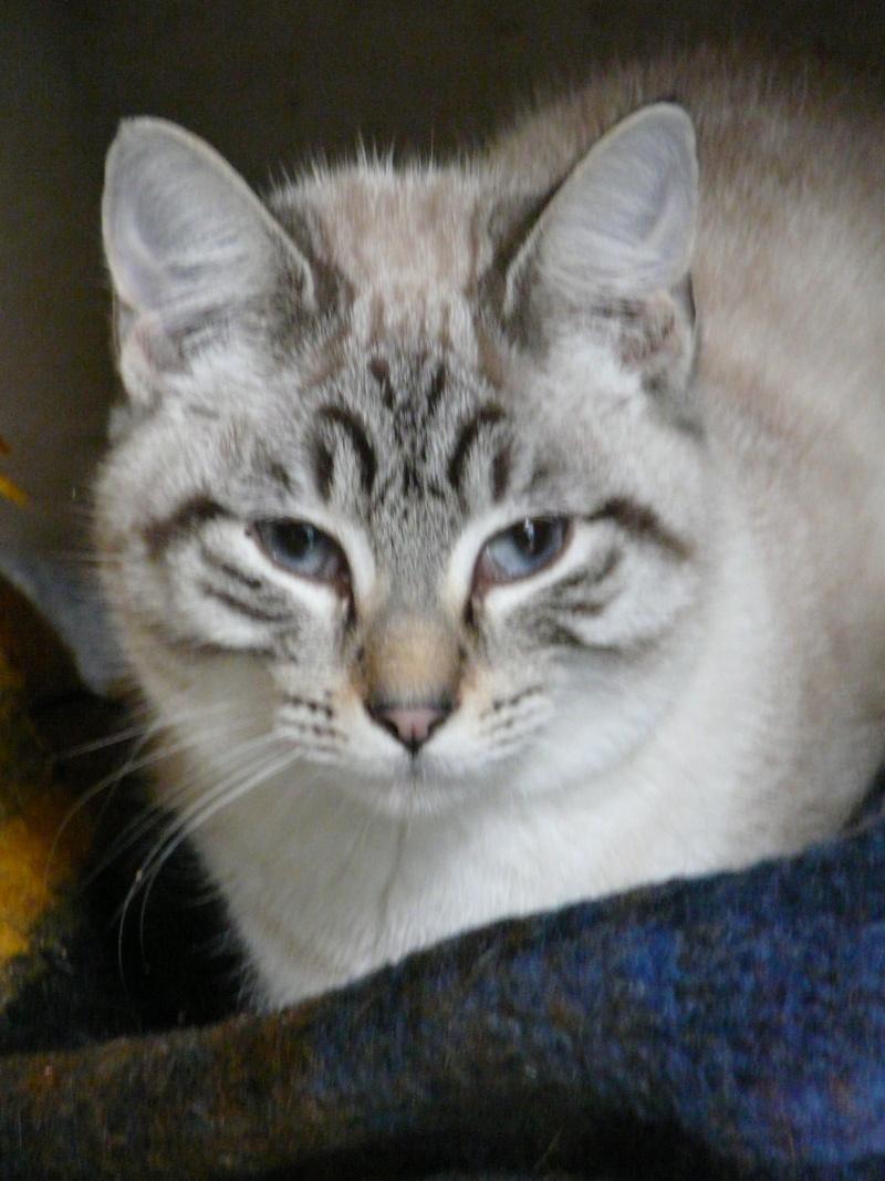 Tiramitsu chaton F environ 5 mois(35) P1050311
