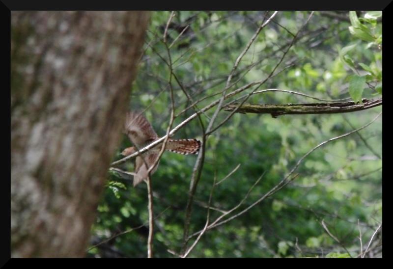 qui suis je ? pour les ornithos en herbe Img_0810