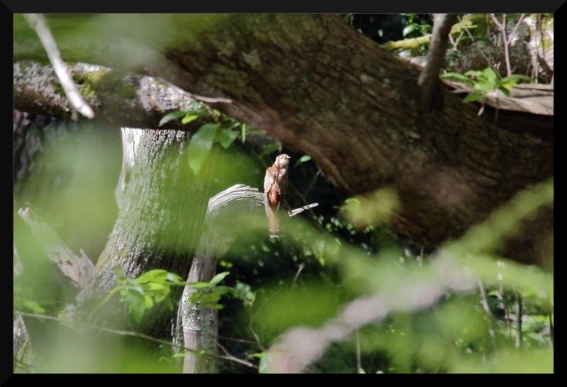 qui suis je ? pour les ornithos en herbe Img_0811