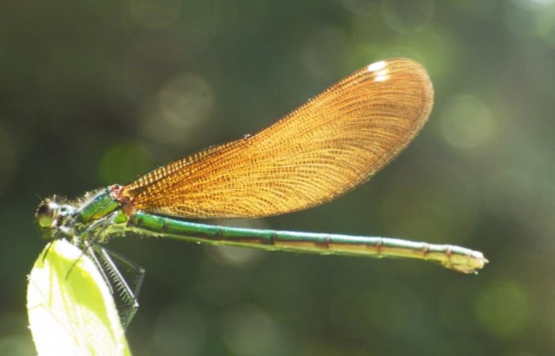 quelques espèces pour ID Imgp5410