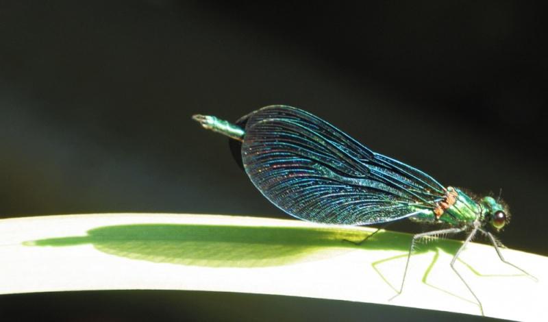 quelques espèces pour ID Imgp5610