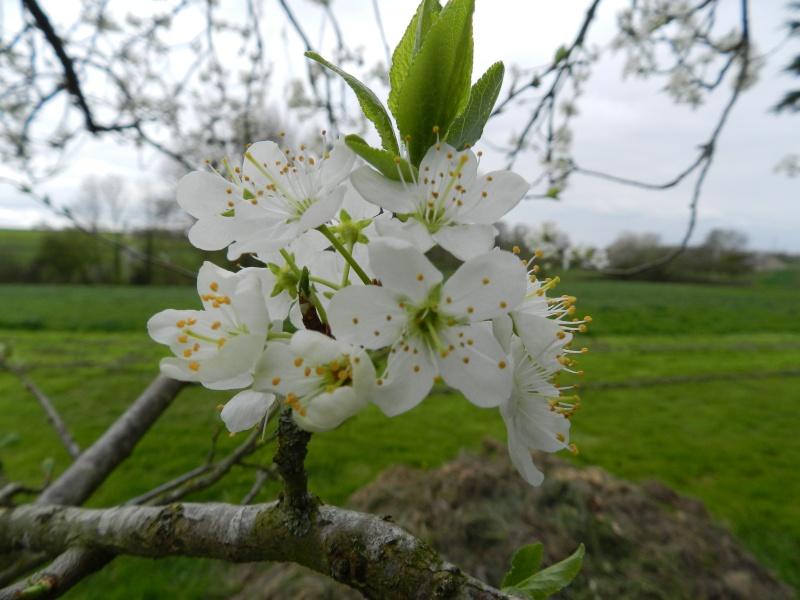 Samedi 11 avril 2015, Mayenne au printemps Vauvyr12
