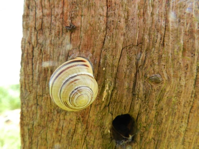 Dimanche 3 mai 2015, consoude et escargots Vauvyr62