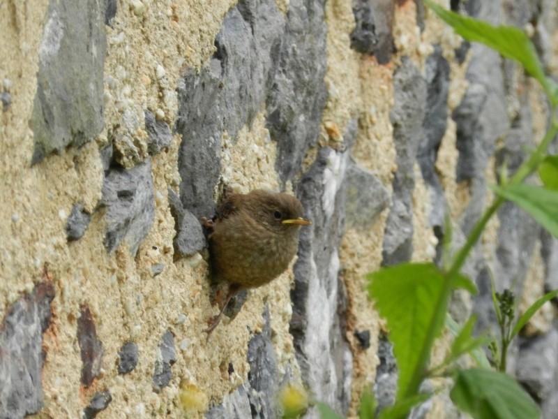 Samedi 23 mai et dimanche 24 mai, animaux sauvages et plantes de Mayenne Vauvyr82