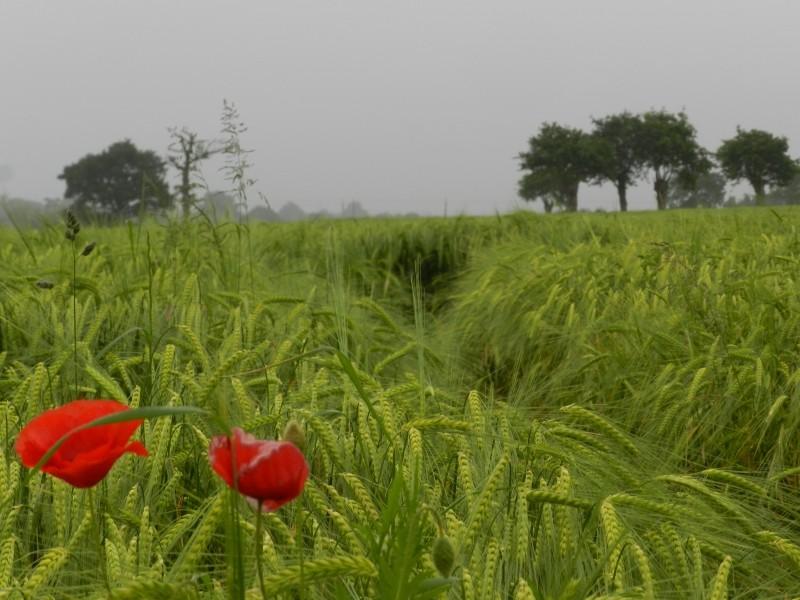 Samedi 23 mai et dimanche 24 mai, animaux sauvages et plantes de Mayenne Vauvyr85
