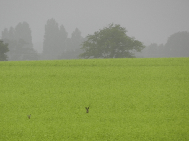 Samedi 23 mai et dimanche 24 mai, animaux sauvages et plantes de Mayenne Vauvyr86
