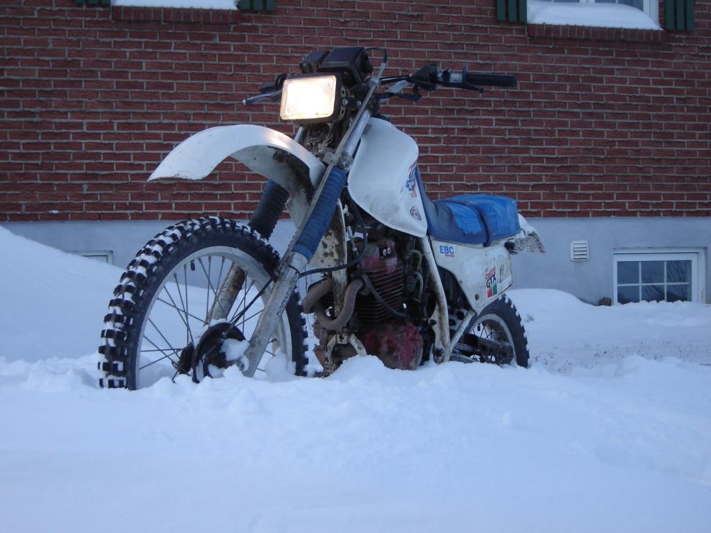 concours photo (janv 2010)votre timono et la neige Dsc03014