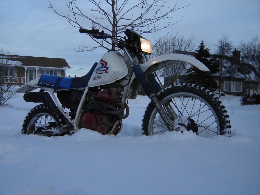 concours photo (janv 2010)votre timono et la neige Dsc03015