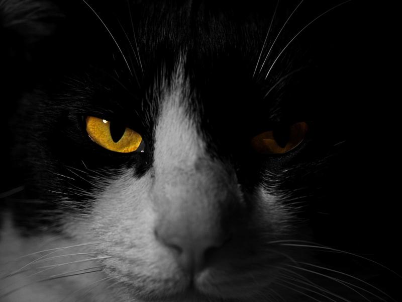 Portrait de chat P1153010