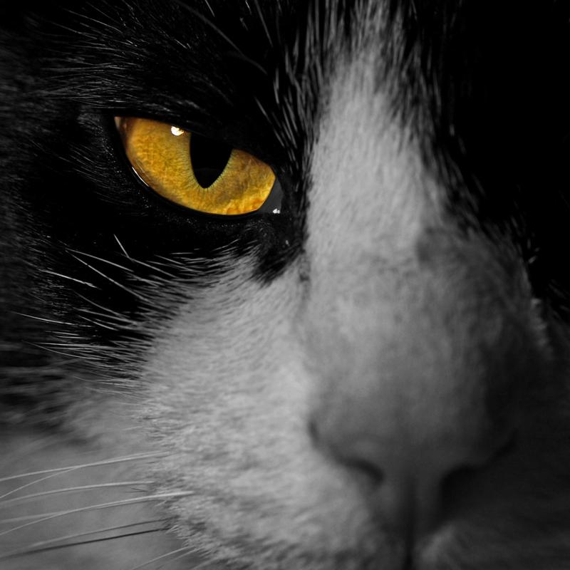 Portrait de chat P1153011