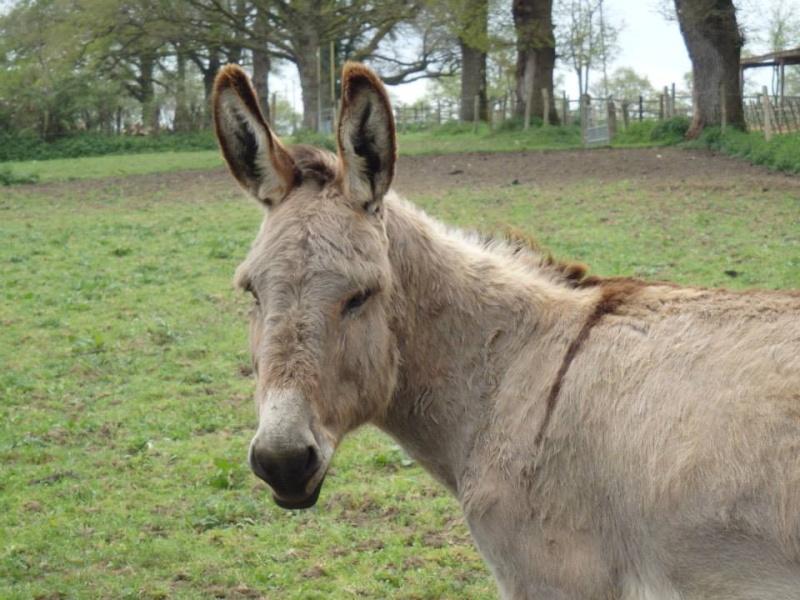 BOURIQUET - ONC âne né en 2009 - adopté en août 2017 par Marie Bouriq10