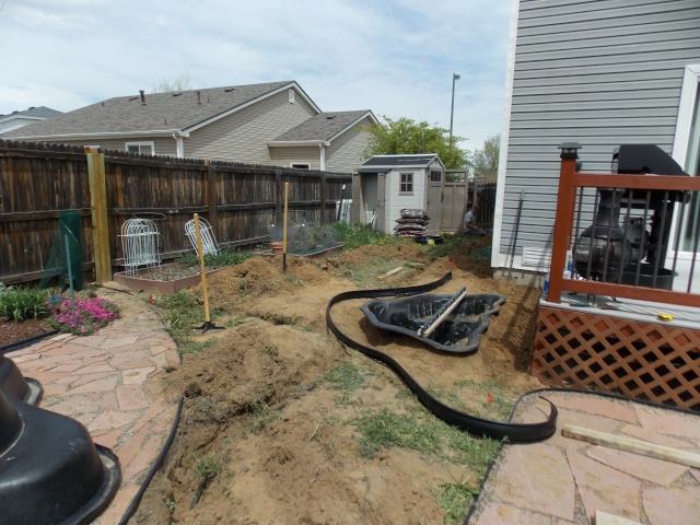 Jenn's 2015 Gardening thread Dscn1715