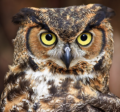 Autres Owlfac10