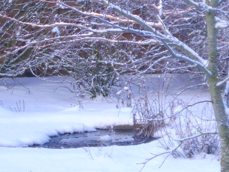 Votre photo pour Février 2010 Dsci0035