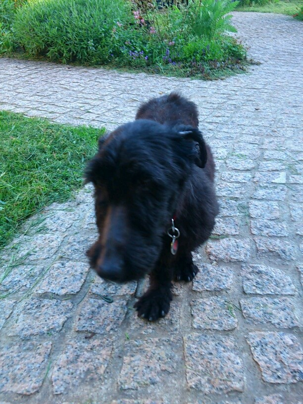 FORBAN MALE 4 ANS  - Page 4 Mms_im10