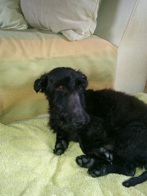FORBAN MALE 4 ANS  - Page 4 Mms_im11