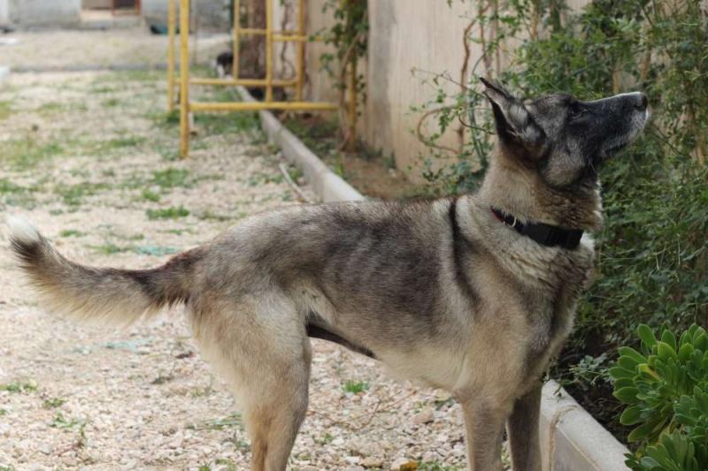 sauvetage en cours, Lena, chienne malade trouvée au bord de la route, Murcia Espagne. janvier 2015. - Page 2 Img_1410