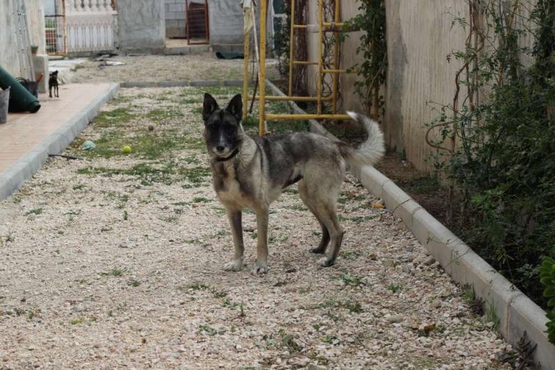 sauvetage en cours, Lena, chienne malade trouvée au bord de la route, Murcia Espagne. janvier 2015. - Page 2 Img_1411
