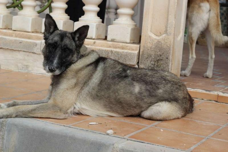 sauvetage en cours, Lena, chienne malade trouvée au bord de la route, Murcia Espagne. janvier 2015. - Page 2 Img_1413