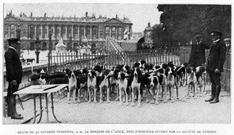 Comte de l'Aigle, membre du premier comité du Retriever Club... Francp12