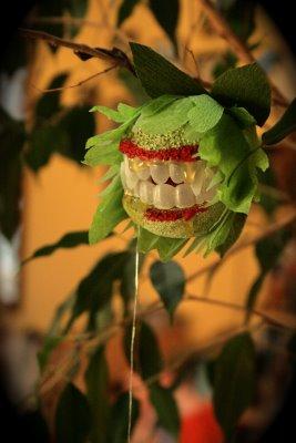 El jardín sonriente Img_5810