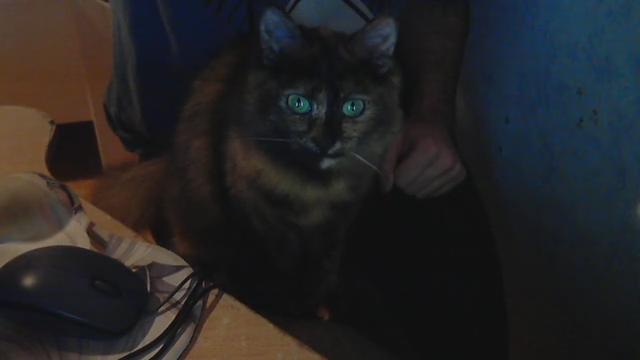 Praline et Coyote, les chattes de Mirodin Video_11