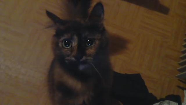 Praline et Coyote, les chattes de Mirodin Video_12