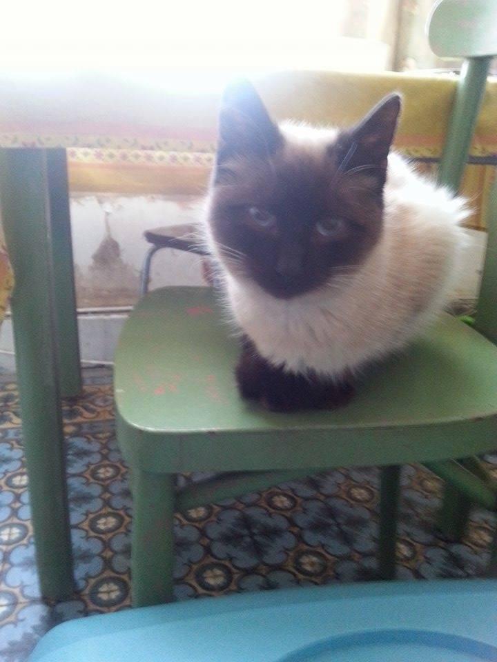 Un chat de plus à la maison 11073310